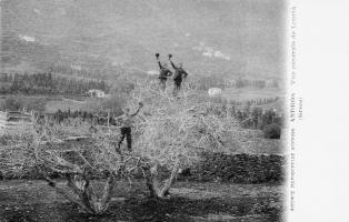«Χαιρετίσματα από την Άνδρο»: Ταχυδρομικά δελτάρια, 1900-1960 by John Stathatos --
