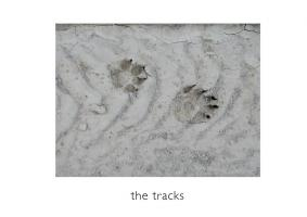 John Stathatos: A Visual Primer of the World: the tracks