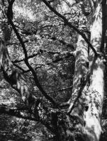 John Stathatos: Homage to Melville / Γιάννης Σταθάτος: Φόρος τιμής στον Μέλβιλ