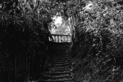 John Stathatos: The Gardens of the Hesperides / Γιάννης Σταθάτος: Οι κήποι των Εσπερίδων