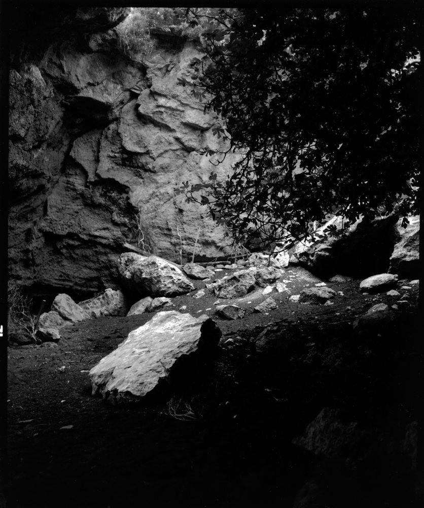 The Gardens of the Hesperides | John Stathatos